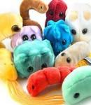 Защита организма от микробов