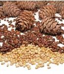 Орехи для мужского здоровья