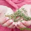 Травы от цистита у женщин