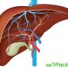 Симптомы рака печени 4 стадии