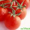 Диета на помидорах на 2 недели