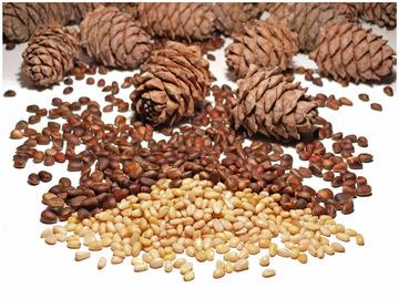 шишки и кедровые орехи на белом фоне