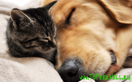 кошка и  собака спят