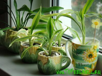 Растения-вампиры
