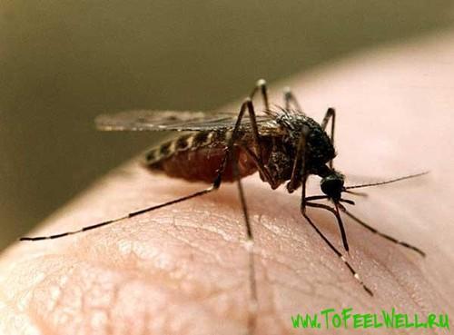 комар сидит на коже