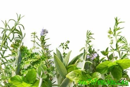 лекарственные травы на белом фоне