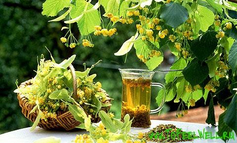 травы и стакан стоят на столе