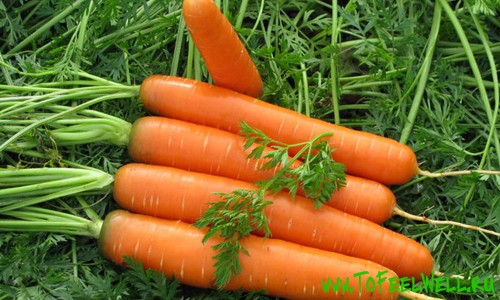 морковь на зеленом фоне