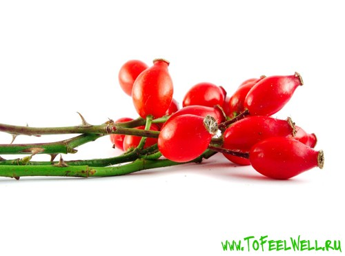 ягоды шиповника на белом фоне